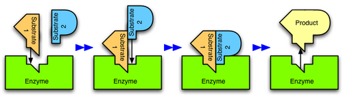 Enzymes-- Biotechnology Stocks
