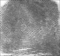 fingerprint identification thesis