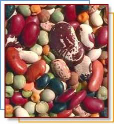 Photo of dried beans