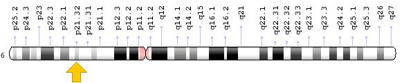HLA Chromosome 6 region