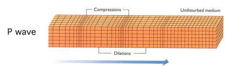 The P wave  or compressional  P Wave